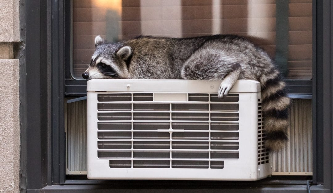 5 Points To Ponder, Air Conditioner Maintenance Guide